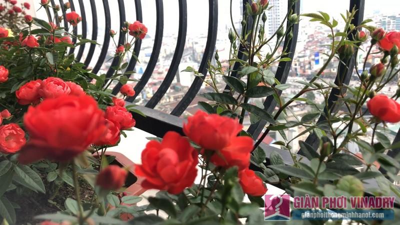 Ban công rực rỡ, ngập tràn sắc hoa của gia đình cô Mỵ